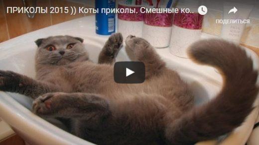 Приколы про котов самые смешные видео - новые, свежие, веселые