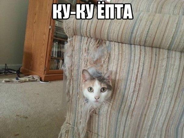 Прикольные картинки и фото котов с смешными надписями 1