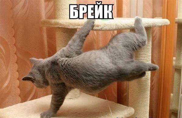 Прикольные картинки и фото котов с смешными надписями 10