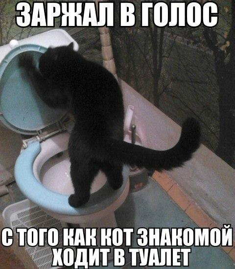 Прикольные картинки и фото котов с смешными надписями 13