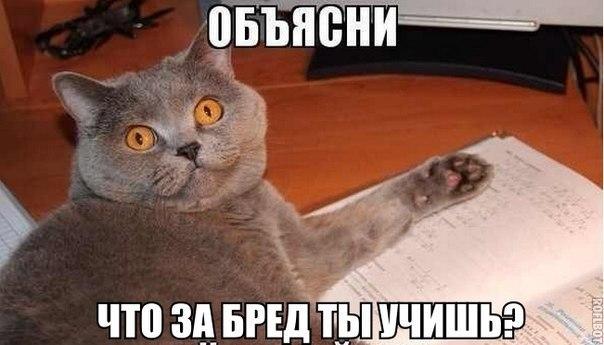 Прикольные картинки и фото котов с смешными надписями 14