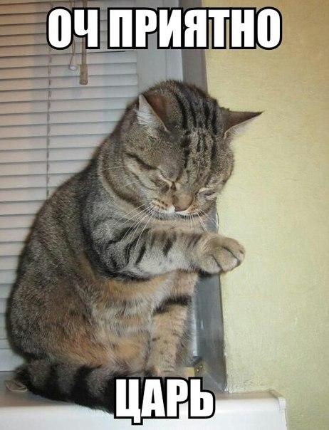 Прикольные картинки и фото котов с смешными надписями 2