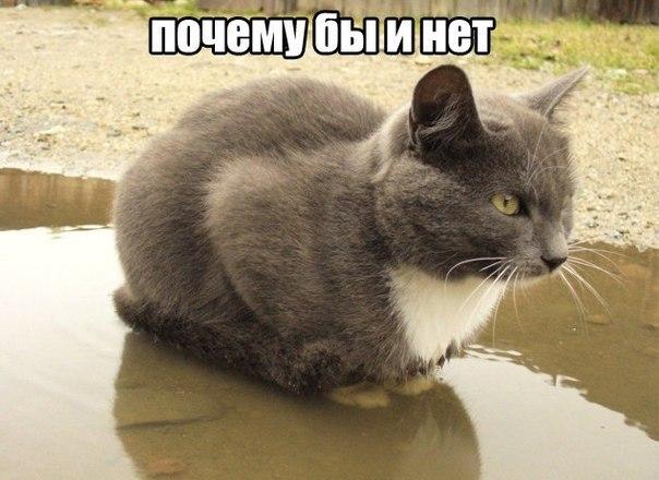 Прикольные картинки и фото котов с смешными надписями 5