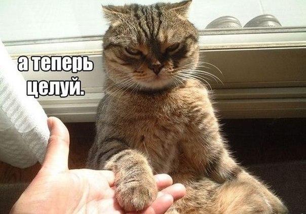Прикольные картинки и фото котов с смешными надписями 9