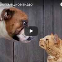Ржачные и смешные видео про котов и собак - смотреть бесплатно