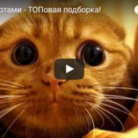 Самые смешные видео про котов и кошек - смотреть бесплатно