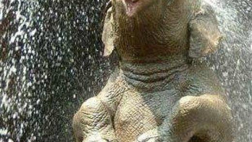 Самые смешные животные в мире - фото, картинки, веселые 10