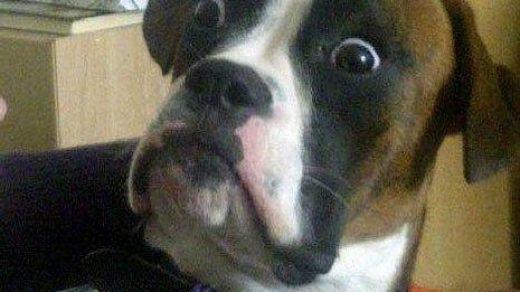Самые смешные животные фото и картинки - смотреть бесплатно 1