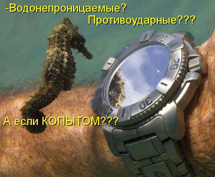 Самые смешные животные фото и картинки - смотреть бесплатно 10