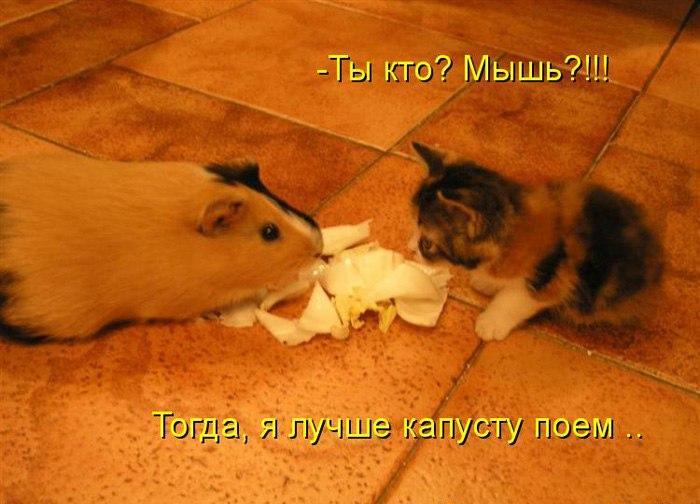 Самые смешные животные фото и картинки - смотреть бесплатно 12