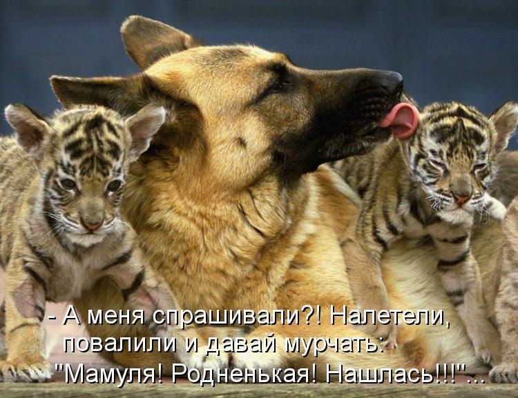 Самые смешные животные фото и картинки - смотреть бесплатно 18
