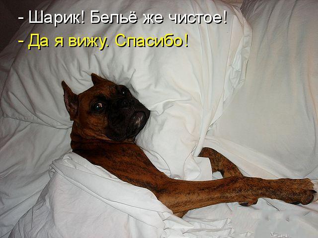 Самые смешные животные фото и картинки - смотреть бесплатно 9
