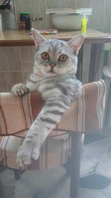 Самые смешные коты фото и картинки - смотреть бесплатно 11