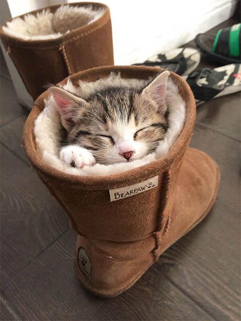 Самые смешные коты фото и картинки - смотреть бесплатно 5