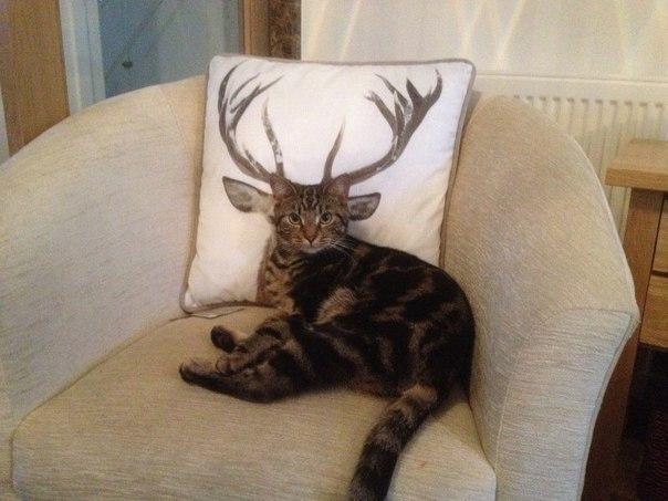 Самые смешные коты фото и картинки - смотреть бесплатно 7
