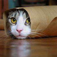 Самые смешные кошки - фото, картинки, прикольные, красивые 13