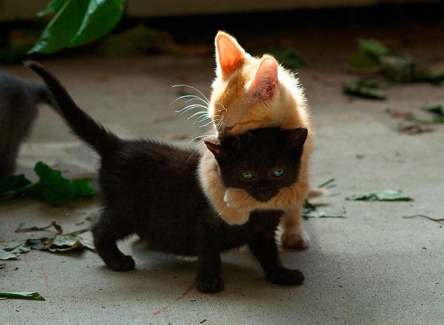 Самые смешные кошки - фото, картинки, прикольные, красивые 15