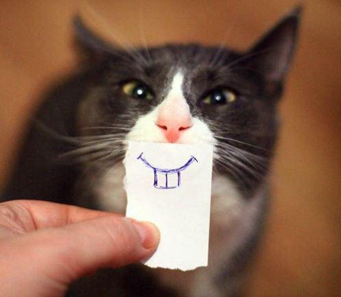 Самые смешные кошки - фото, картинки, прикольные, красивые 17