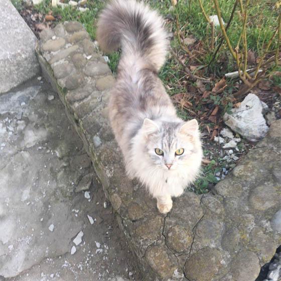 Самые смешные кошки - фото, картинки, прикольные, красивые 18