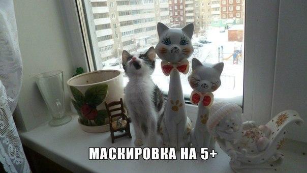 Самые смешные кошки - фото, картинки, прикольные, красивые 2