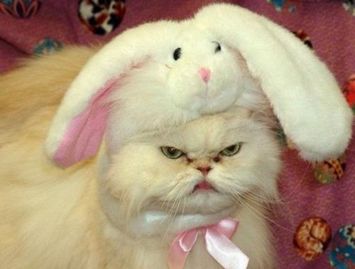 Самые смешные кошки - фото, картинки, прикольные, красивые 3