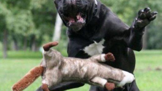 Самые смешные фото собак - прикольные, веселые, ржачные 15
