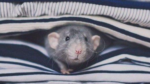 Смешные фотки животных - ржачные, веселые, прикольные, смотреть 18