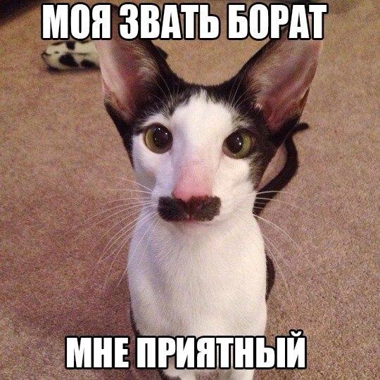 Смешные фото кошек с надписями - ржачные, веселые, прикольные 11