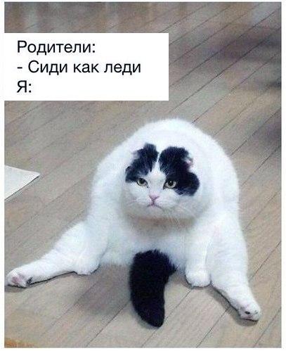 Смешные фото кошек с надписями - ржачные, веселые, прикольные 13