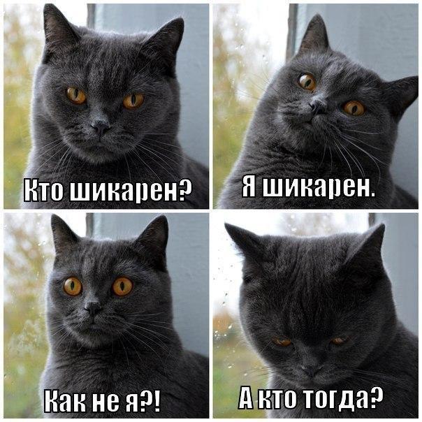 Смешные фото кошек с надписями - ржачные, веселые, прикольные 14