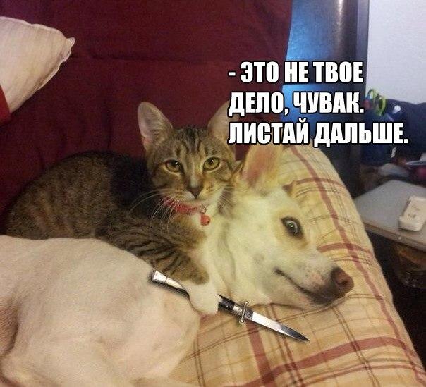 Смешные фото кошек с надписями - ржачные, веселые, прикольные 17