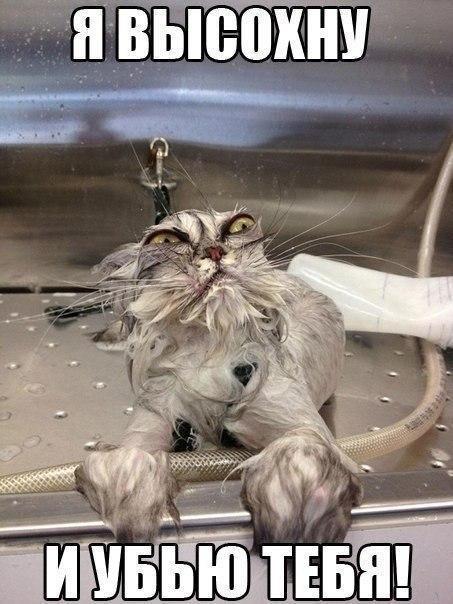 Смешные фото кошек с надписями - ржачные, веселые, прикольные 18