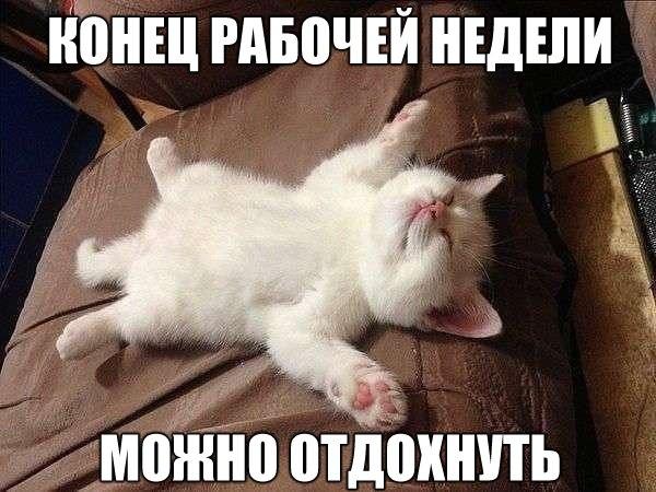 Смешные фото кошек с надписями - ржачные, веселые, прикольные 2