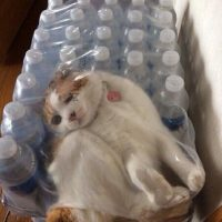 Смешные фото кошек с надписями - ржачные, веселые, прикольные 20