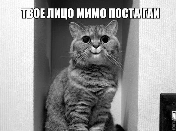 Смешные фото кошек с надписями - ржачные, веселые, прикольные 4