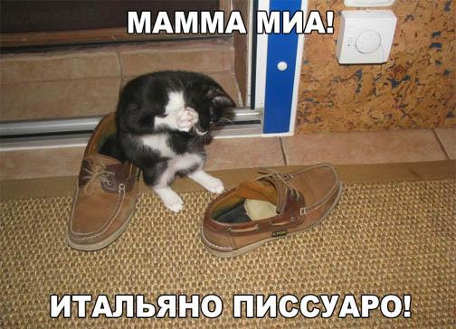 Смешные фото кошек с надписями - ржачные, веселые, прикольные 5