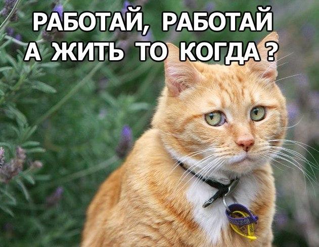 Смешные фото кошек с надписями - ржачные, веселые, прикольные 6