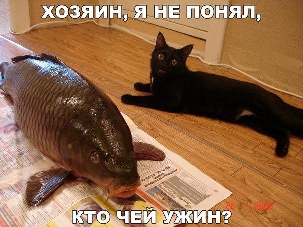Смешные фото кошек с надписями - ржачные, веселые, прикольные 8