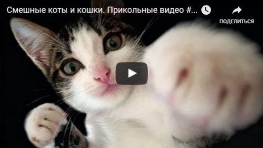 Смотреть бесплатно смешные видео про котов до слез - подборка