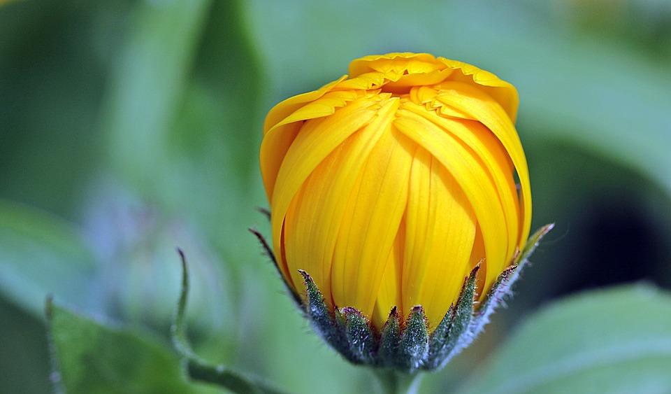 Удивительные растения - фото, картинки, красивые, интересные 12