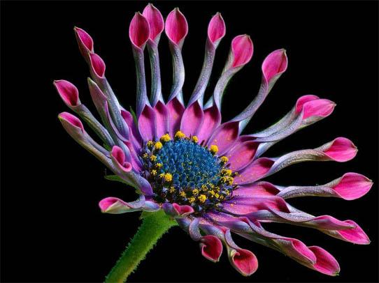 Удивительные растения - фото, картинки, красивые, интересные 15