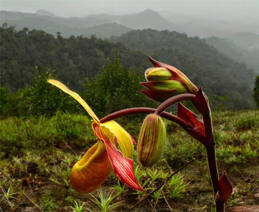 Удивительные растения - фото, картинки, красивые, интересные 2