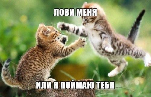 Фото самых смешных котят, прикольные котики - фото и картинки 1