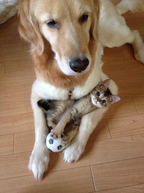 Фото самых смешных котят, прикольные котики - фото и картинки 10