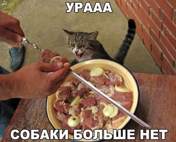 Фото самых смешных котят, прикольные котики - фото и картинки 11