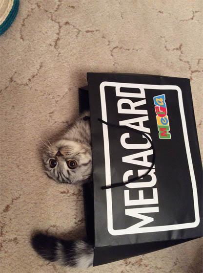 Фото самых смешных котят, прикольные котики - фото и картинки 13