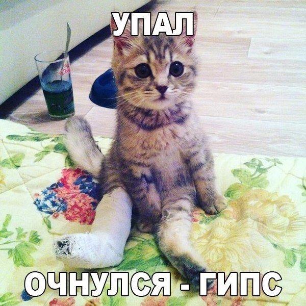 Фото самых смешных котят, прикольные котики - фото и картинки 16