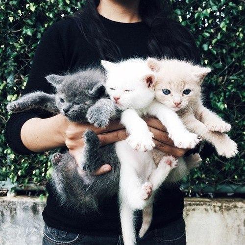 Фото самых смешных котят, прикольные котики - фото и картинки 2