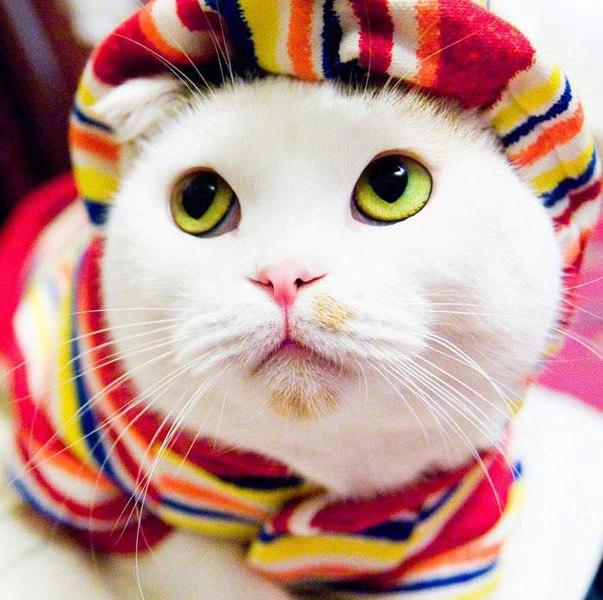 Фото самых смешных котят, прикольные котики - фото и картинки 8