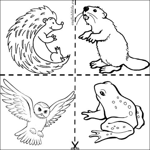 Черно белые картинки животных для детей - смотреть бесплатно 10